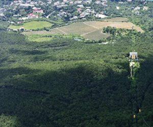 В Крыму высадят свыше 200 га лесов