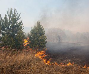 В Крыму высокая пожароопасность