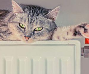 Аксенов поручил включить отопление в большинстве соцобъектов в Крыму в течение трех дней