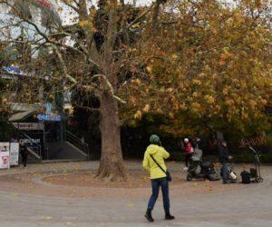 В Ялте запретили рубить деревья