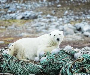 """Куда пропали осетры, почему белые медведи идут на помойки и как люди """"съедают"""" природу"""