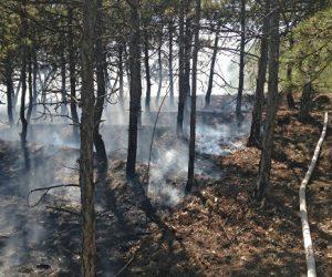 Вопреки засухе: в Крыму снизилось число пожаров