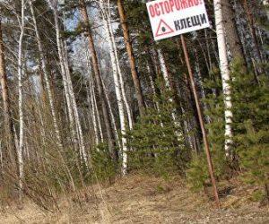 В Крыму клещи вышли на охоту – предупреждение МЧС
